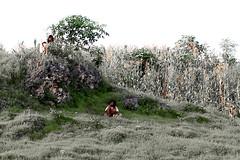 IMG_6601 (wi dodow) Tags: cerita tuban bukit anakanak kancing pesonaindonesia