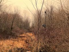Former Erie Lackawanna signal near Bippus Indiana (Matt Ditton) Tags: abandoned indiana erie lackawanna bippus
