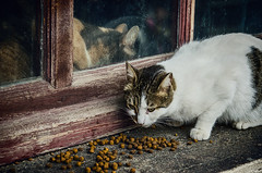 Separate dining quarters (Melissa Maples) Tags: food cats window animals turkey nikon asia eating trkiye istanbul catfood kitties nikkor vr afs  18200mm  f3556g  18200mmf3556g d5100