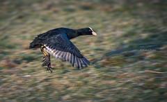 Whoopeeee!!!!!! (Ingeborg Ruyken) Tags: morning sunrise dawn flickr nederland thenetherlands denbosch dropbox ochtend shertogenbosch noordbrabant zonsopkomst natuurfotografie diezemonding 500pxs