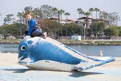 A whale of a time (Stuart Borrett) Tags: california family usa water outdoor paddle row longbeach teamwork springbreak2016