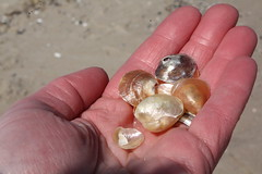 Iridescent seashells (TheFairView) Tags: ocean beach seashells oceangrove icallthesetoenailshells