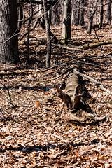 Metropark_Kensington-30937.jpg (CitizenOfSeoul) Tags: park wood tree leaf outdoor michigan wildlife kensington metropark textur