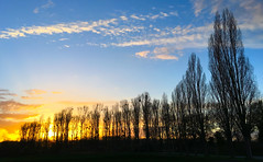 Sunset with a explosion of golden color (G. Lang) Tags: blue trees sunset sky clouds germany deutschland gold golden spring sonnenuntergang himmel wolken blau bume frhling colorexplosion badenwrttemberg farbexplosion linkenheimhochstetten iphone6s