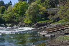 DSC_7305.jpg (Cameron Knowlton) Tags: ocean canada water canal nikon bc victoria rapids inlet gorge narrows tillicum reversing d610 reversingrapids camosack tillicumnarrows canalofcamosack