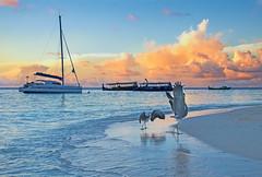 Birds Sunrise Dancing (ceca67) Tags: morning sea beach birds sunrise boats island dance dancing maldives cluds svetlana herons fihalhohi ceca67 svetlanapericphotography