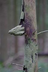 IMGP9747-o (Thomas Sommer) Tags: tree diy bokeh bark baum rinde xenar schneiderkreuznach 55200