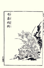 Common garden peony and winter wren (Japanese Flower and Bird Art) Tags: winter flower bird art japan garden japanese book picture peony wren common troglodytes woodblock toyo nishimura paeonia troglodytidae sesshu lactiflora shigenaga readercollection unkoku paeonicaeae