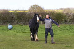 IMG_1276 (Kev Gregory (General)) Tags: horse dog pets fun happy play woo chase gregory kev canter gallop trixi