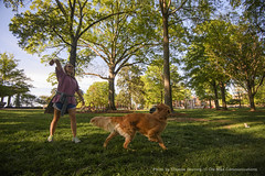 Week in Photos - 21 (Ole Miss - University of Mississippi) Tags: usa dog spring grove oxford ms fetch 2016 campusscenes ctg0300 maryjurdan