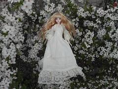 Blossom (Piccolo Fiore.) Tags: blossom noord jdoll loosterweg