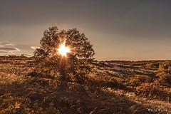 Sunset (lajza27) Tags: sunset plant tree nature field canon landscape outdoors spring hungary outdoor naplemente lovenature stipa pland rvalnyhaj szeretematermszetet rvalnyhajtenger