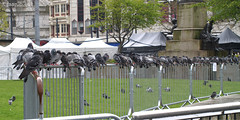On the railings... (Finn Frode (DK)) Tags: uk holiday bird birds animal garden square manchester outdoor weekend pigeon dove olympus sit railing piccadillygardens urbanopenspace e400