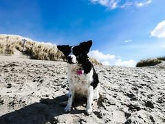 (118/366) Sypke (145/365) (MJ Klaver) Tags: strand nederland photoaday ameland kust project365 project366