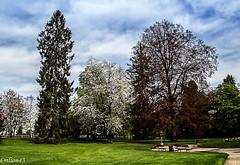 Parc Kennedy-Vichy. (Crilion43) Tags: france nature fleurs jardin ciel arbres nuages allier paysage parc brouillard vichy auvergne sapin herbe thuya