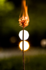 Light Em Up (O.S. Fisher) Tags: light orange white flower green canon fire photography utah photo weeds weed bokeh dandelion flame photograph 5d markiii shaunfisher canon5dmarkiii osfisher olivershaunfisher burnround1