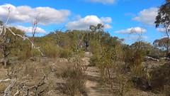 Para Wirra 36 (WEA Ramblers) Tags: hiking australia bushwalking southaustralia parawirra yattalunga fayharding