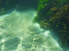 Jellyfish (Figgles1) Tags: beach jellyfish snorkel south snorkeling fremantle groyne southbeach fsc southfremantle fremantlesailingclub p1020056