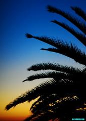 MalibuSunrisePalm (mcshots) Tags: california morning winter sky usa tree beach nature sunrise palms coast stock malibu pch socal palmtree mcshots losangelescounty
