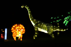 Dinosaur Lantern 2 (pokoroto) Tags: autumn canada calgary night zoo october dinosaur alberta lantern 10 2015     kannazuki   themonthwhentherearenogods 27
