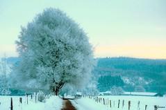 Neufmoulin du matin (vidjanma) Tags: neige paysage arbre chemin givre matin ardenne