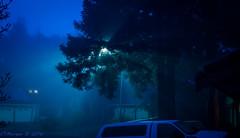20160126-004.jpg (ctmorgan) Tags: california dublin fog streetlight unitedstates redwood filteredlight ledstreetlight