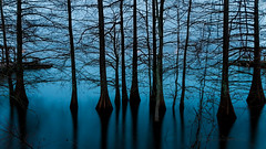 winter blue (Mr. Greenjeans) Tags: blue trees winter lake silhouette louisiana cypresstrees lakebruin