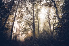 Misty Tranquility (Augmented Reality Images (Getty Contributor)) Tags: trees winter mist cold leaves forest woodland landscape scotland path perthshire handheld