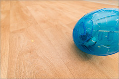 Naughty Hamster (mikeyp2000) Tags: pee ball puddle accident hamster wee