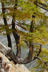 Meyes 02 (maurizio.broglio) Tags: parco gran paradiso nazionale delle vallone valsavarenche meyes