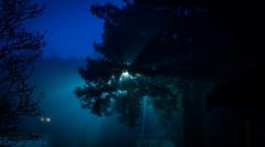 20160126-001.jpg (ctmorgan) Tags: california dublin fog streetlight unitedstates redwood filteredlight ledstreetlight