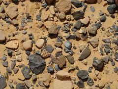 Ciad Ennedi N (ursulazrich) Tags: sahara ceramic desert chad flakes sahel keramik artefacts sherds tchad tschad artefakte ciad ennedi peterfuchs nioladoa