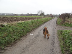 2016-0092 (schuttermajoor) Tags: nederland hond che eijsden 2016 airedaleterrier ommetjenederland