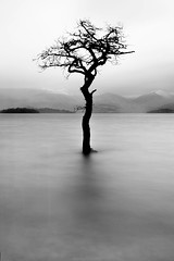Tree at Milarrochy Bay (Manadh) Tags: winter blackandwhite water landscape scotland pentax sigma loch lochlomond waterscape k3 1835mm milarrochybay 10nd manadh