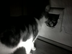 20160208-232230-o-1 (Catflap central) Tags: camera dog pet cats woof cat pi raspberry meow doggie catdoor catflap kattenluik katzenklappe catflapj2nnl taggingasdoguntilautotagginghasanoptout robotaggingisthedevil