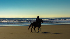 Morning Stroll (massbat (moved to Maine)) Tags: morning shadow horses silhouette maine wells seashore wellsbeach