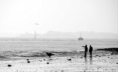 Elbspaziergang mit Hund - strolling along the Elbe (greenoid) Tags: dog beach water strand river couple waves hamburg stock paar pebbles hund fluss elbe stckchen