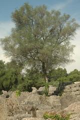 DSC_0270 (chaudron001) Tags: grece favoris