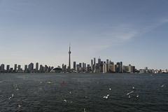Toronto (camila.baumhak) Tags: cidade lake toronto ontario canada tower birds gua azul skyline cn buildings cores lago nikon torre gaivotas aves urbano prdios d3200
