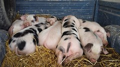 Our weaners