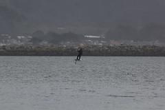 IMG_2510 (armadil) Tags: beach beaches mavericks kitesurfers windsurfers californiabeaches