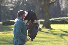 Warwick Castle views. (aitch tee) Tags: nature views birdsofprey warwickcastle englanduk
