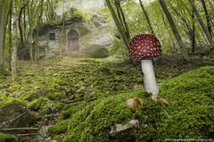 Morgens im Wald (Andre M Photography) Tags: grn fels hobbit wald baum moos pilz fliegenpilz mrchen mrchenhaft felsen morgenlicht