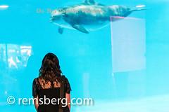 Environmental Portrait photography of Lyle Benson - Baltimore Maryland (Remsberg Photos) Tags: usa water animal aquarium marine aqua maryland baltimore dolphins youngwoman oneperson nationalaquarium aquaticlife bluecolor