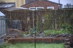 Falling snow (Tony Shertila) Tags: houses england sky snow weather garden europe day britain outdoor greenhouse gar wirral merseyside bromborough presipitation