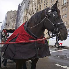L1001741_FF (hallstein) Tags: park new york city cab voigtlander central 15mm hansom