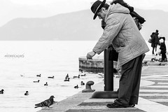 Briciole (Gioia & Andrea) Tags: street old sky blackandwhite cloud white mountain lake black bird eye nature hat animal fog lago photography pier garda hand pigeon gray natura contact crumbs briciole