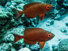 IMG_0238 (eye[4]eye) Tags: egypt diving gypten tauchen bluewaves