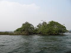 """Rio Dulce: l'île aux oiseaux <a style=""""margin-left:10px; font-size:0.8em;"""" href=""""http://www.flickr.com/photos/127723101@N04/25658621703/"""" target=""""_blank"""">@flickr</a>"""