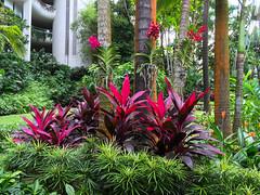 Img507117nx2 (veryamateurish) Tags: singapore shangrilahotel iphone6